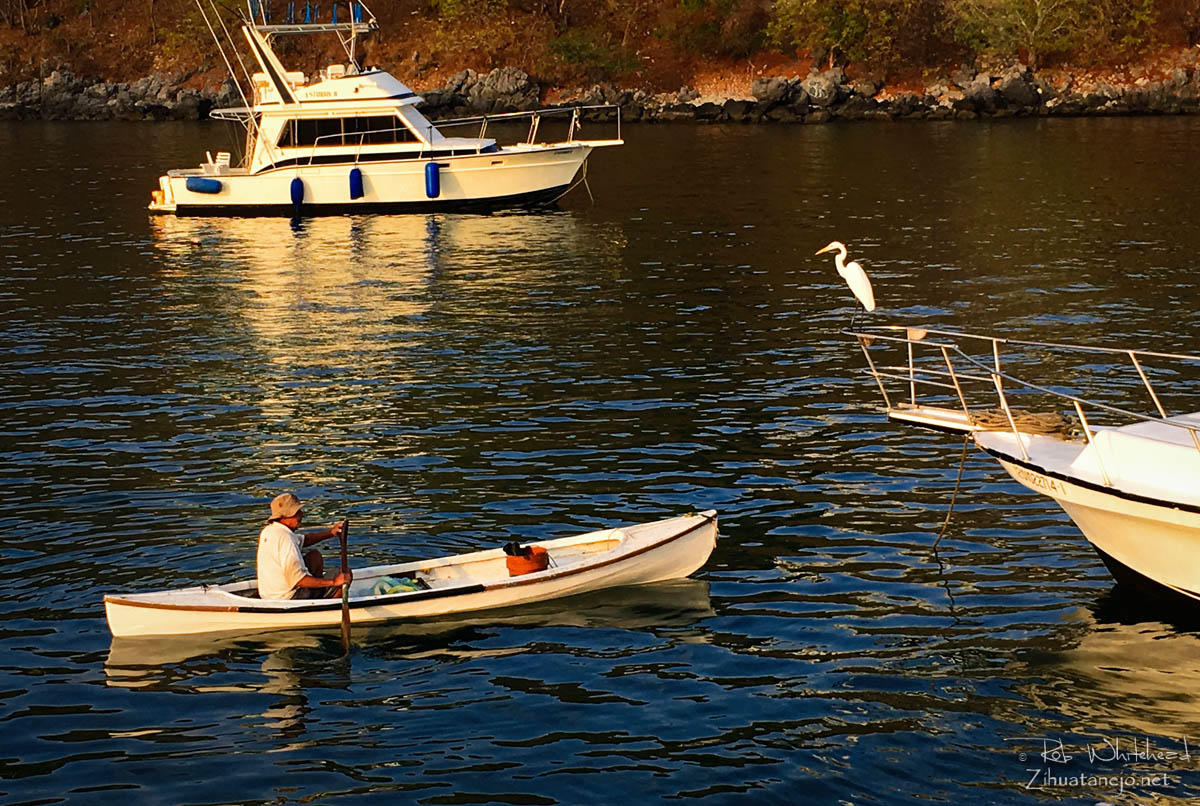 Fisherman in canoe with great egret, Zihuatanejo
